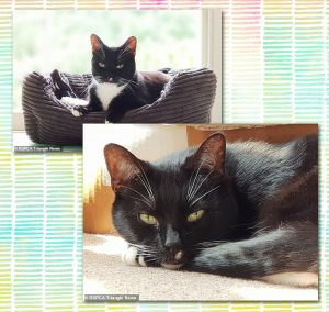 Toby a rescue cat in Canterbury, UK who desperately needs a home of his own