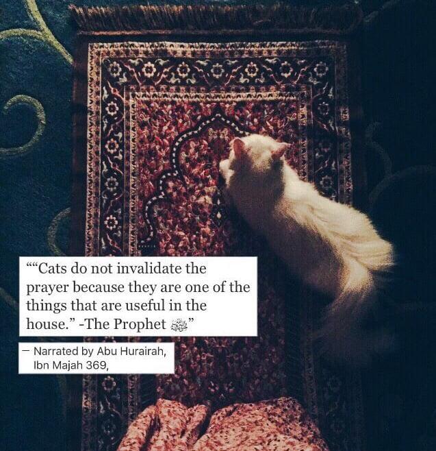 Words of Prophet Muhammad regarding cats