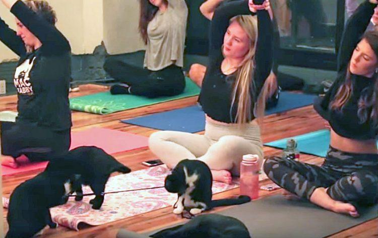 Fusion cat café: yoga and cats