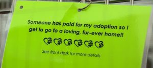 adoption fee paid