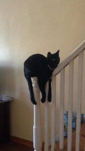 Cat sleeps in weird place