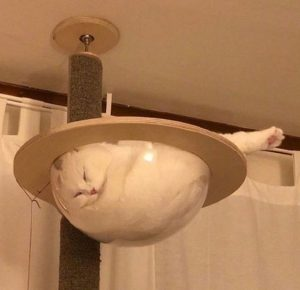 Liquid Cats