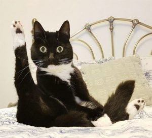 Pilates Cat