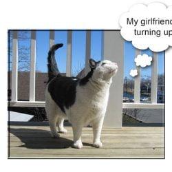 Feline non-recognition aggression