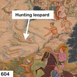 Hunting leopard - a domesticated cheetah