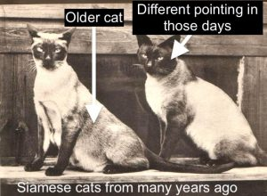 Siamese cats from years ago showing different pointing