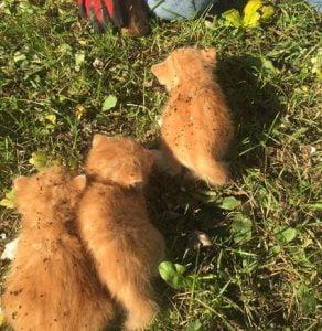 Seven kittens living inside 200 year old felled oak tree