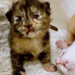 Sad looking kitten