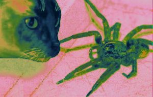 Cat attacking a spider