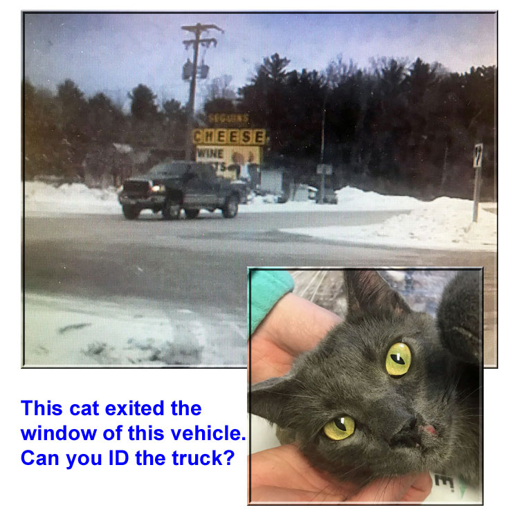 Cat allegedly pushed or thrown  out of moving truck
