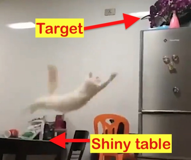 Cat jump fail was not the cat's fault