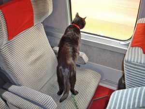 Cat on leash on train