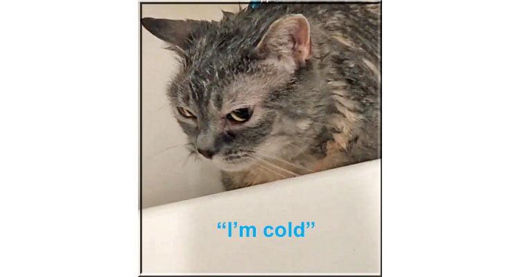 Cat says I'm cold