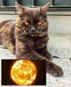 Cat with sun eyes