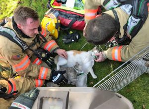 Classic picture of firefighters administering oxygen to cat rescued from house fire