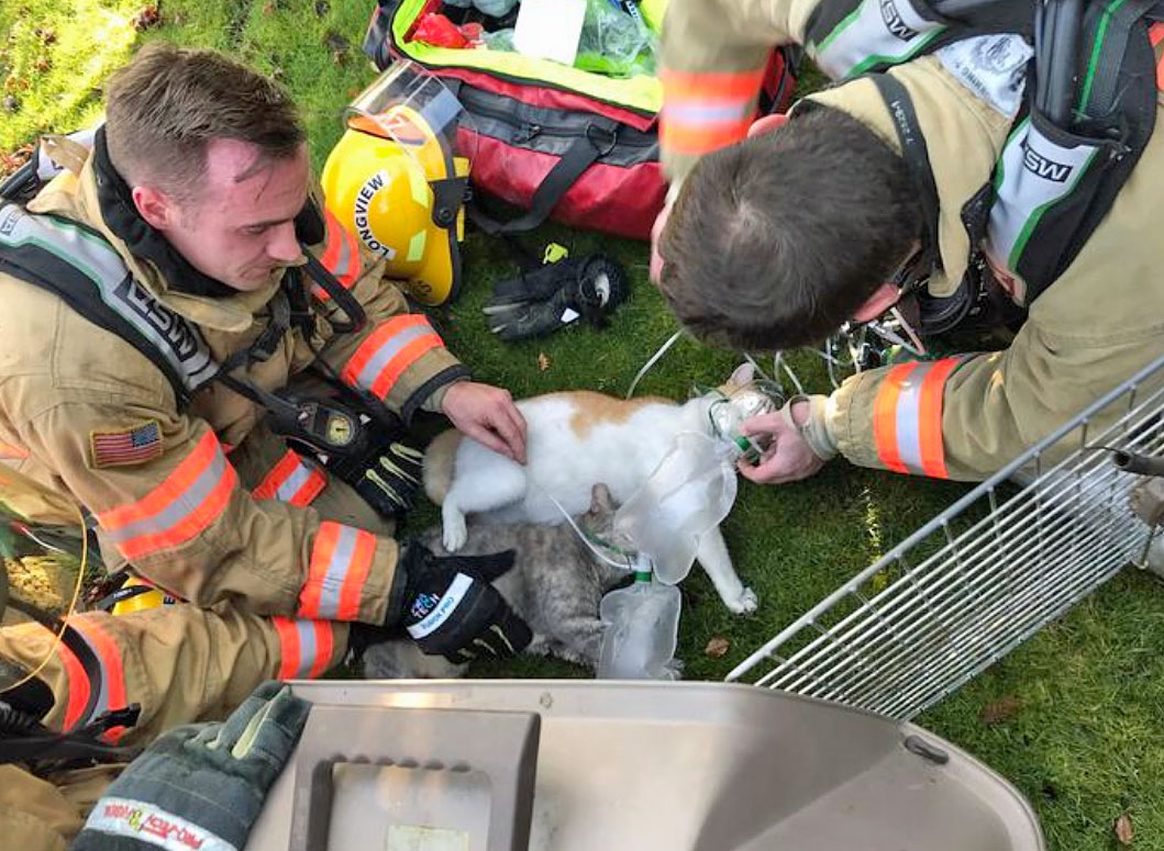 Classi picture of firefighters administering oxygen to cat rescued from house fire