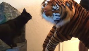 Cole meets plush tiger
