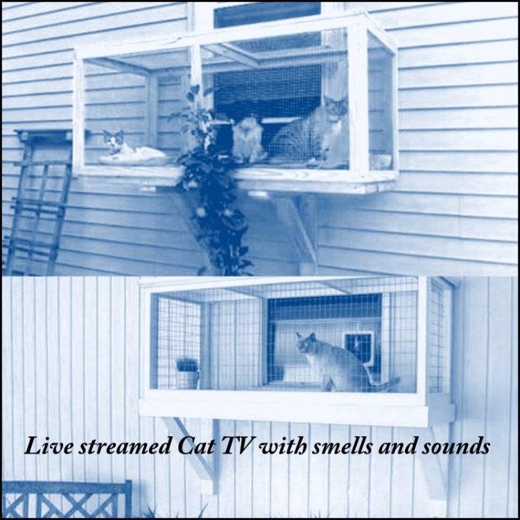 Cat TV - one version