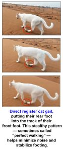 Direct register cat gait