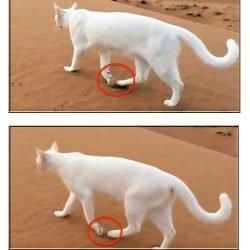 Direct register cat gait