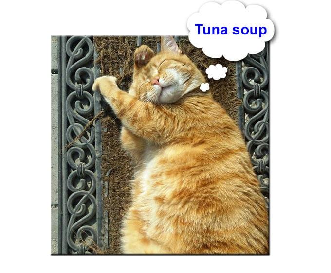 Fat cat dreams of tuna soup