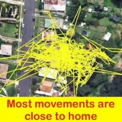 GPS tracked outdoor domestic cat shows how far they wander from home