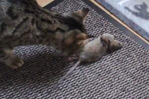 Gabs catches rat