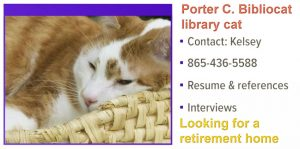 Library cat looking for a retirement home