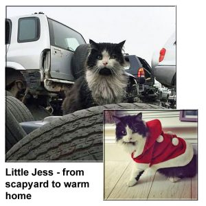 Why this cat ended up living on a scrapyard and not in his warm friendly home
