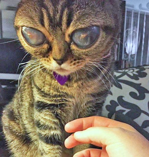 Matilda alien cat