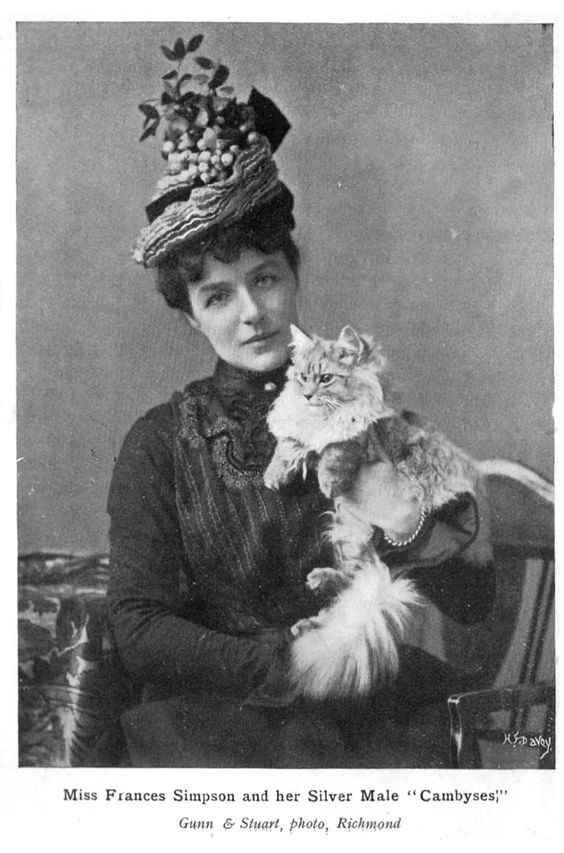 Mrs Simpson and an old fashioned Persian