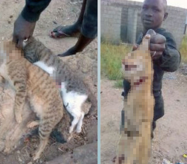 Two cats killed because of a belief in witchraft