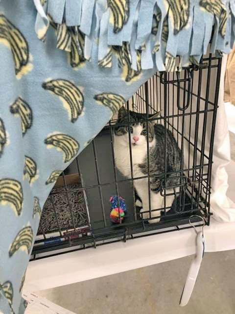 One of 42 cats rescued from Little Bay Islands