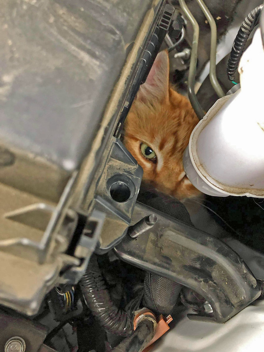 Picture of cat stuck in car engine compartment is a classic