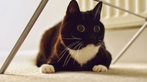 Picture of cat with wide open irises