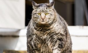 Picture of monumental domestic cat