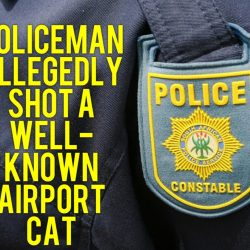 Policeman allegedly shot airport cat
