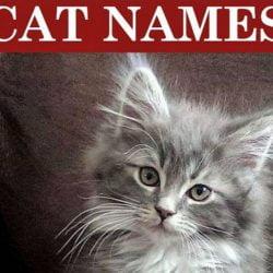 Popular cat names for 2019