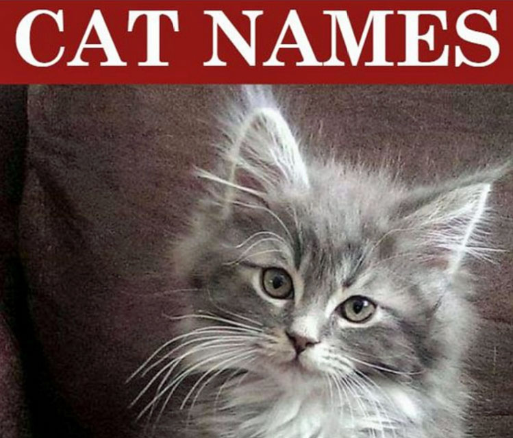 Popular cat names for 2019
