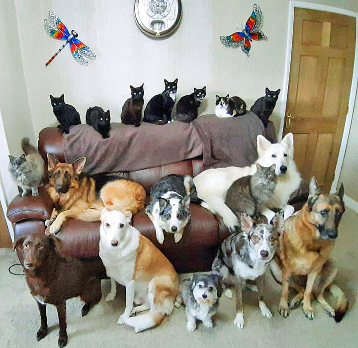 Portrait of 17 cats and dogs