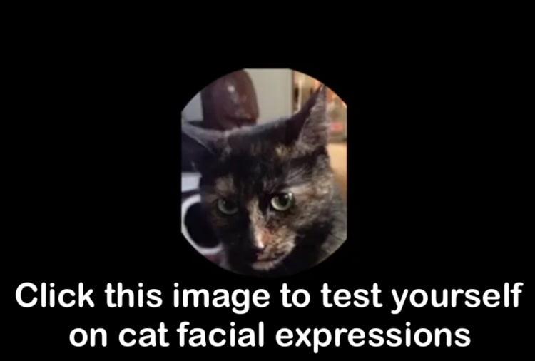 Quiz on cat facial expressions