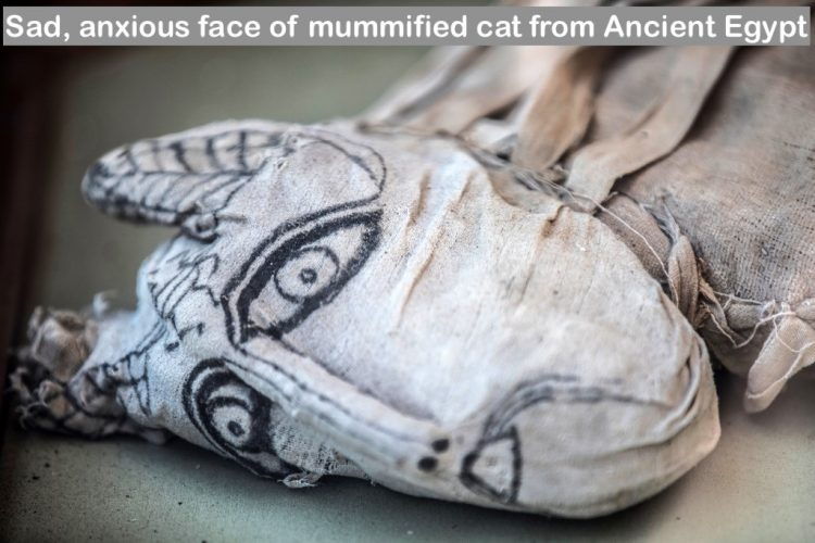 Sad anxious face of cat mummy