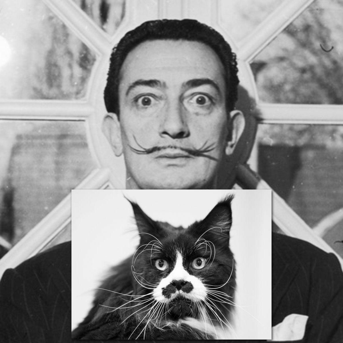 Salvador Dali cat