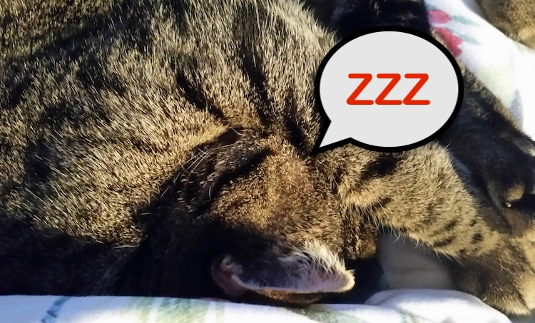 Domestic cats are polyphasic sleepers