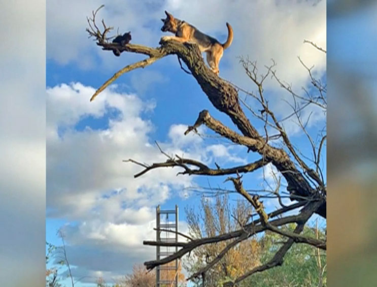 Dog chases cat up a tree and gets stuck