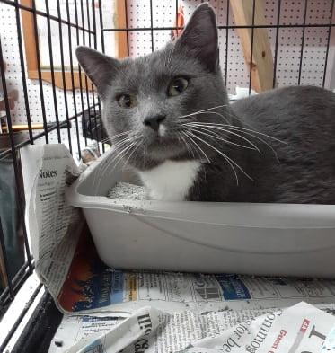 cat rescued