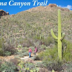 Pima Canyon Trail where three mountain lions were shot because they were scavenging on a human corpse