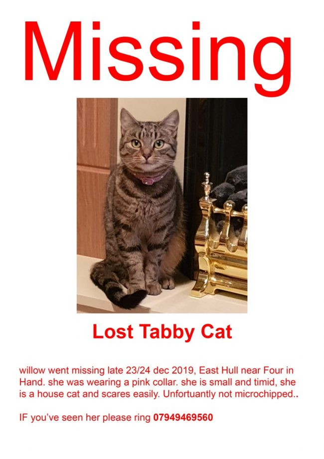Willow has gone missing and her owner is very concerned