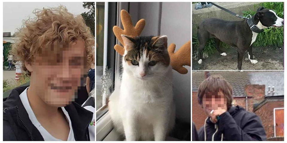 Alleged members of gang hunting cats with dogs at night