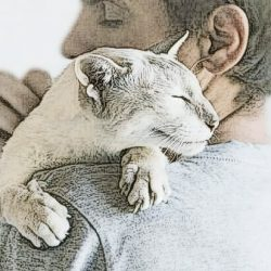 Cats bond with humans to the same extent as human infants and dogs